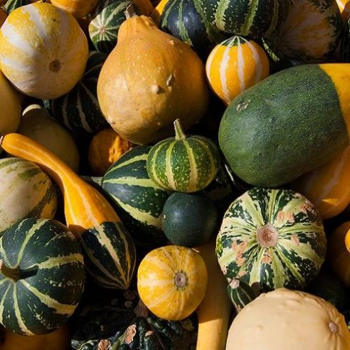 Cucurbita Pepo - Gourds Small fruited Mix - 45 seeds